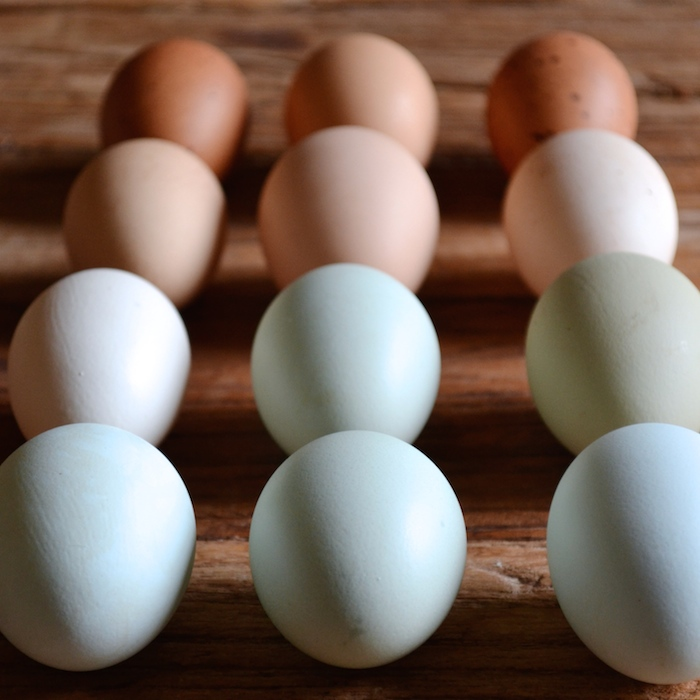 Urban Eggs // The Social Bee for The Daily Social