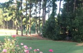 the backyard :)