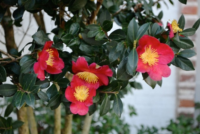 The loveliest red and yellow flowers!
