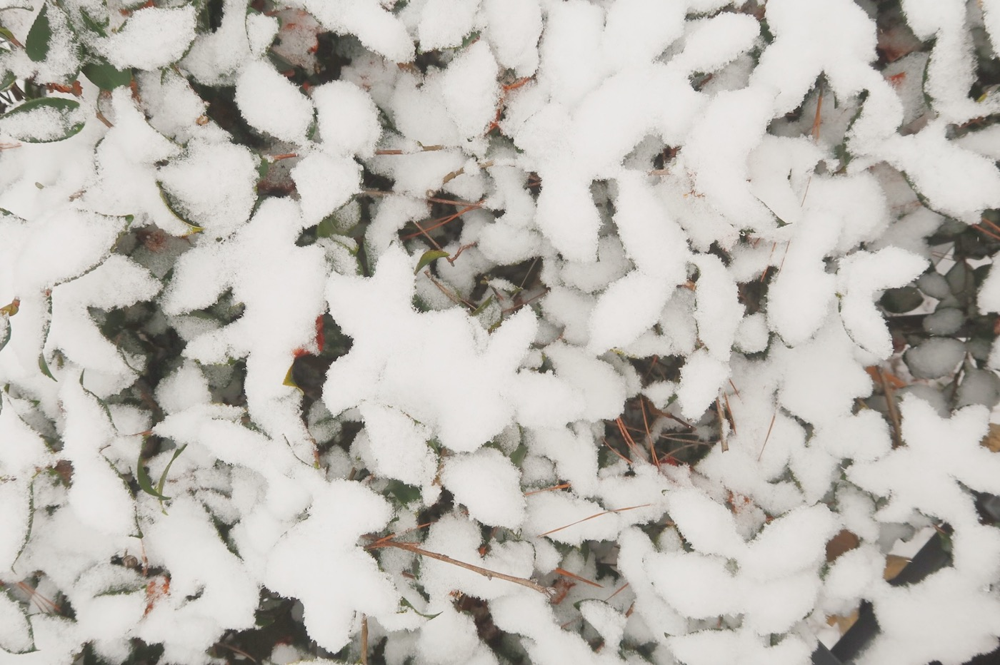 Snow // www.thehiveblog.com
