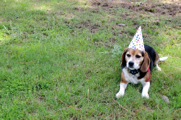 A Beagle Birthday Party // www.thehiveblog.com