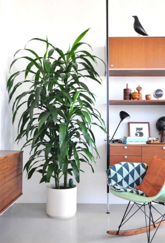 What I'm Loving: Plants in the baby's room // www.thehiveblog.com
