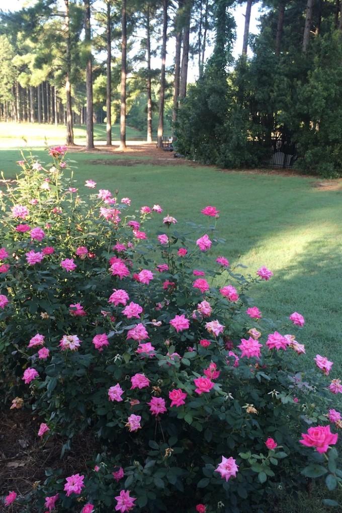 the backyard :)